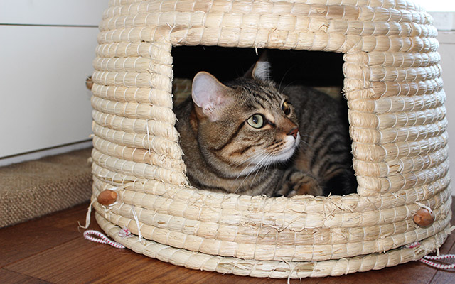愛しのペットCAT編・猫とシアワセに暮らす