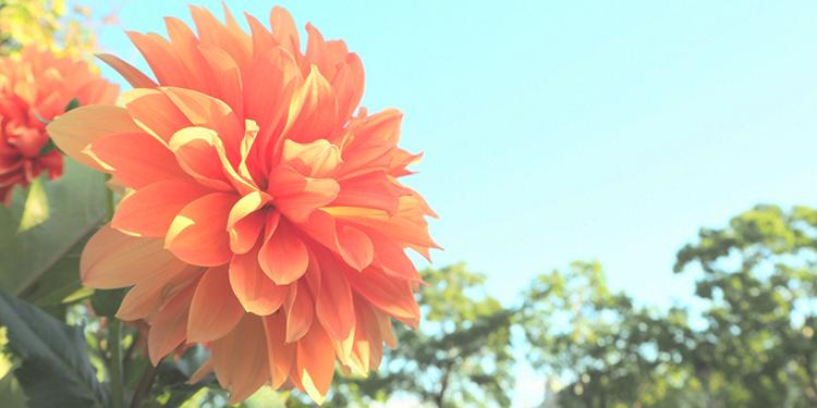 rejob08_096_flower_top
