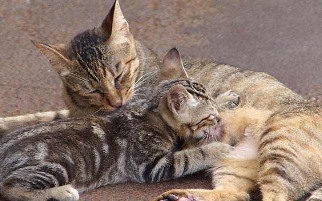 猫とシアワセに暮らす