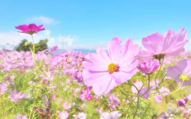 10月の花を知る