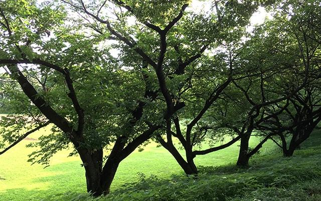 緑あふれる公園