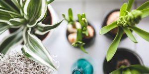 開店祝いにも喜ばれるサロンに似合う観葉植物