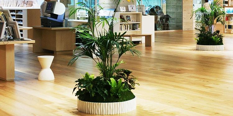 店内に癒しを与える『観葉植物』をレンタルしよう!
